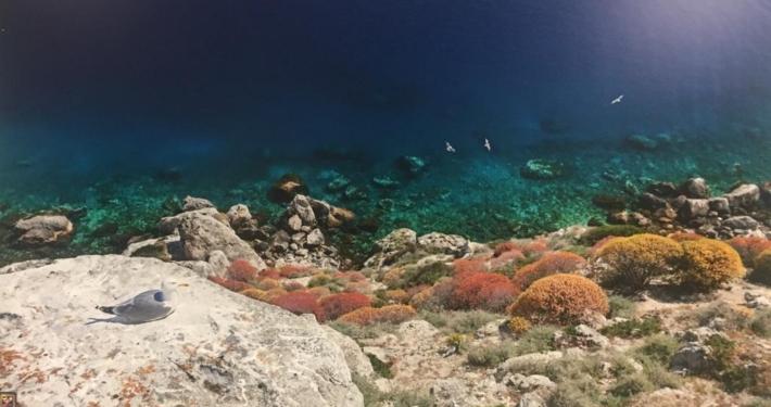 Fondali Isole Tremiti